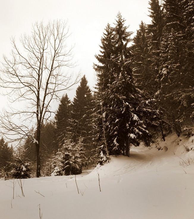 Zima sa vrátila do hôr.