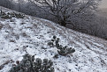 Zima v Karpatoch I.