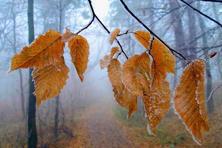 Cestou v hmle