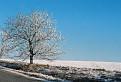 Belasá zima