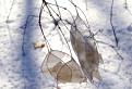 V zimnom negližé alebo Priesvitná krása / 1.4375