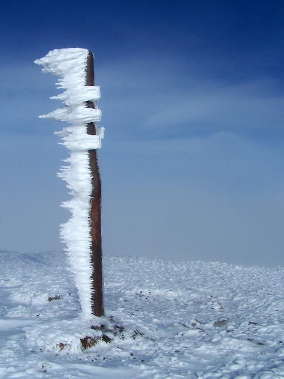 Vymrznutý smerovník