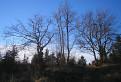 Októbrové stromy