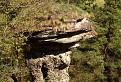 Markušovský hríb