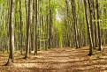 Cestička bukovým lesom