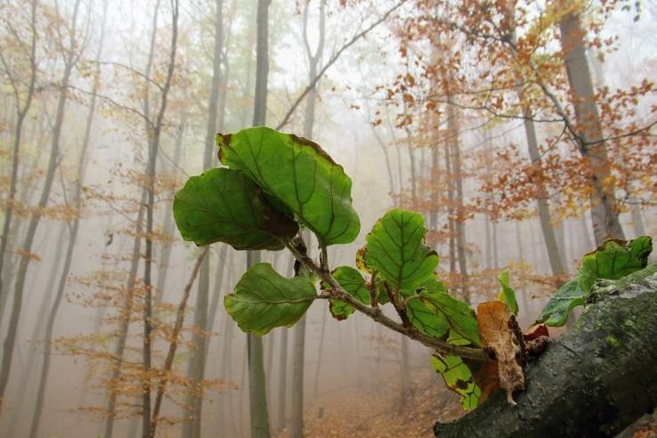 Prechádzka v hmle