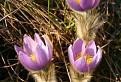 Jar na Zarubach...