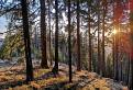 Les pod Prašivou