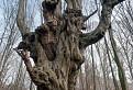 Horror strom