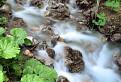 Vrátniansky potok