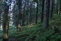 chodník tajomným lesom