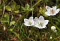 Ešte kvitnú
