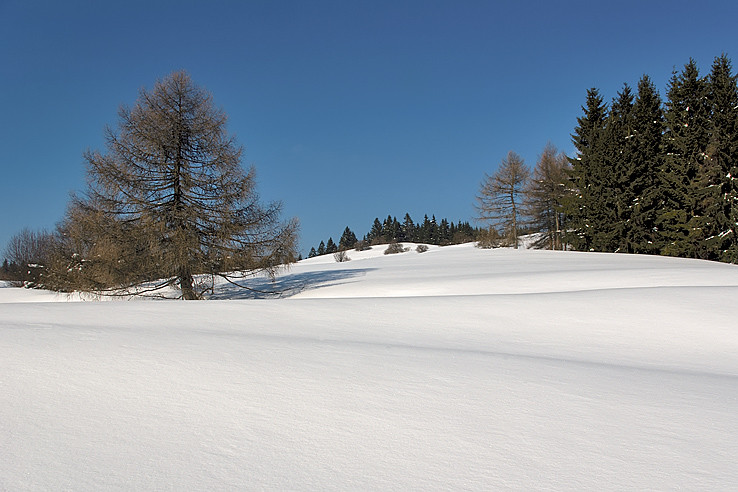 Pod Studeným vrchom