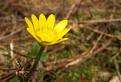 Kvetinka...