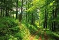 Krásny bukový les / 1.0000