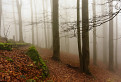Lesním chodníkom na Sitno