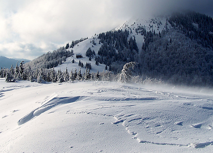 Zimisko