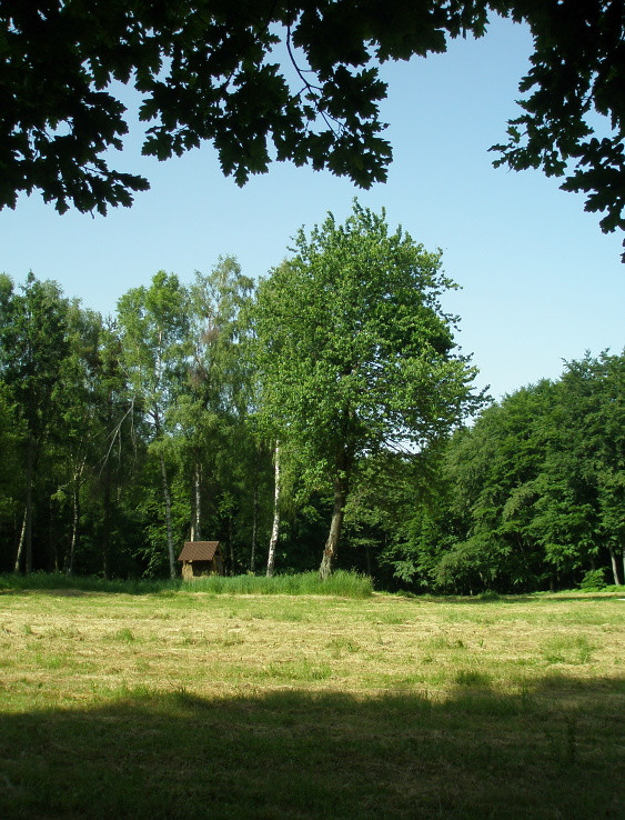 Lesná čistina