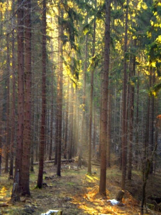 prve ranne luce v lese