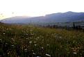 Podvečer na lúke plnej kvetov