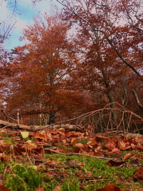 Jeseň pod Inovcom II
