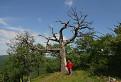 Baobab ...