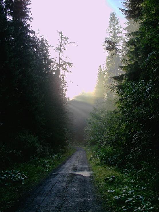 ráno cestou do Koprové