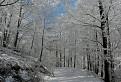 Zimná krajina III.