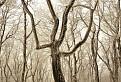 Tancujúci strom