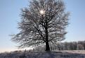 Strom z hviezdou