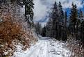 Cesta na Kolesárovu hoľu