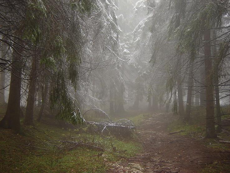 Tajomno lesov Slovenského raja