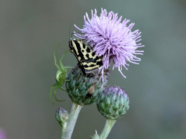 pavuk a motýl