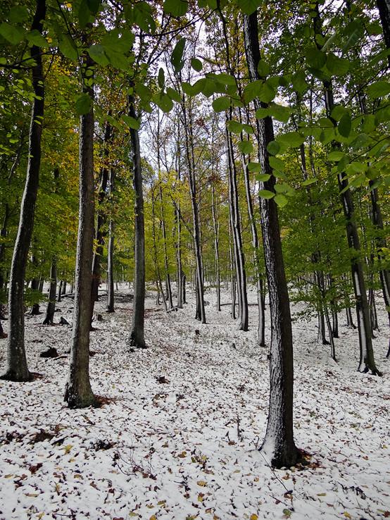 Jesenno-zimná