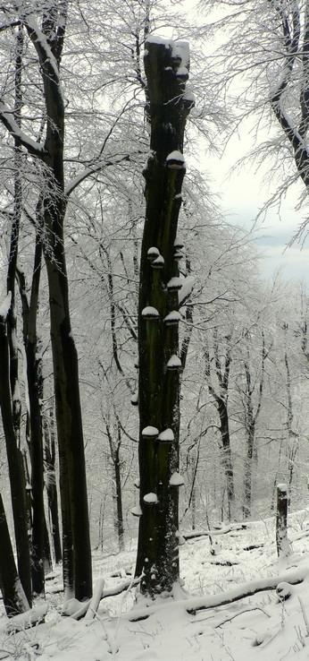 Hubový strom
