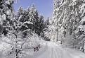 Zima pod Zlieňom