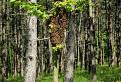 Niekomu uleteli včely