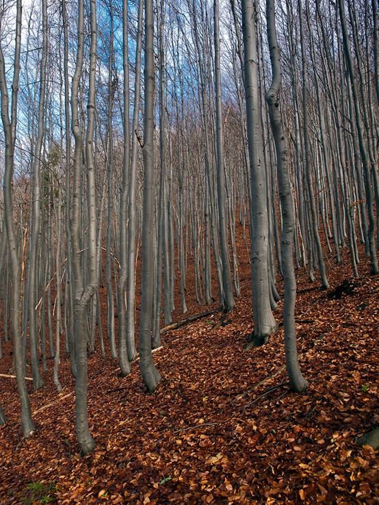 Les pod Strážovom