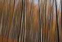 Malokarpatskym lesom