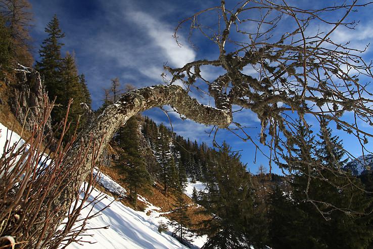 Pustý strom