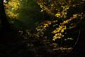 Tolkienovský les