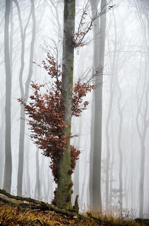 Tajomný les v Karpatoch V.