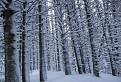 Šľahačkové stromy