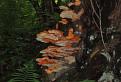 Svetielkujúce huby