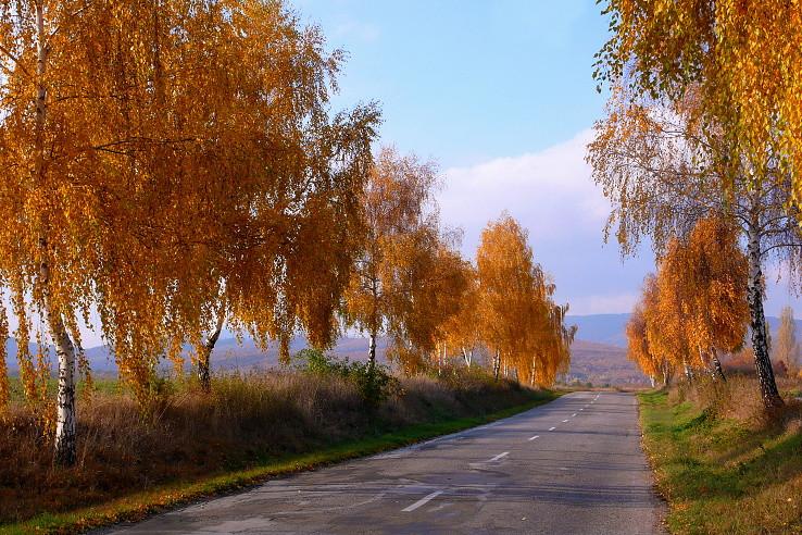 Zlato popri ceste