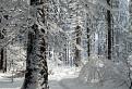 Zimným chodníčkom / 1.0313