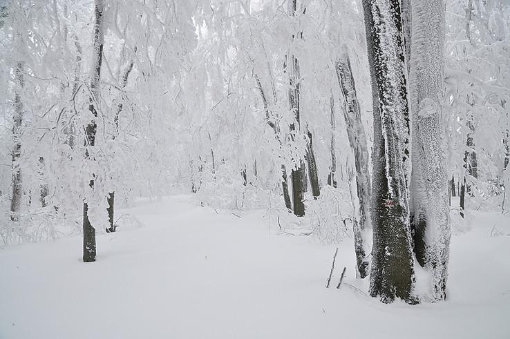 V kraji snehovom II.