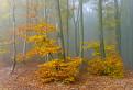 Milochovská jesenná galéria