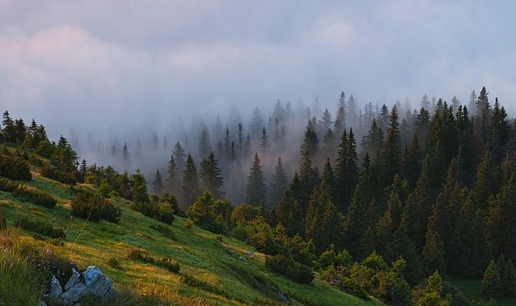 Zahmlený les ...
