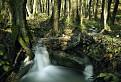 Vajnorský potok / 1.0400